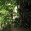 Entdeckungstour im Dschungel...
