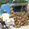 Abacaxi - frisch und saftig