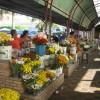 Der Blumenmarkt von Aracaju
