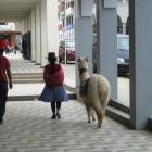 Haustier auf peruanisch