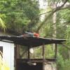 Riesenpapagei im Dschungel