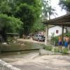 Sonntag Nachmittag im brasilianischen Dschungel