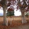 Fantastische Herbststimmung in Calafate
