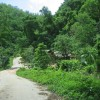 Fahrt auf der immergruenen Halbinsel Paria