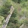 Papageien in freier Wildbahn