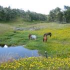 Pferde und Bluemchen in TDF