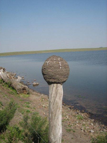 Komisches Vogelnest und der See auf unserer Estancia