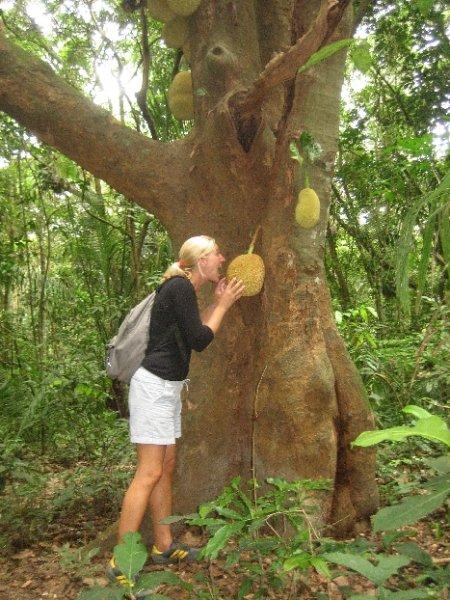 Im Dschungel gibts schon komische Fruechte...
