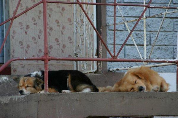... den Haushunden...