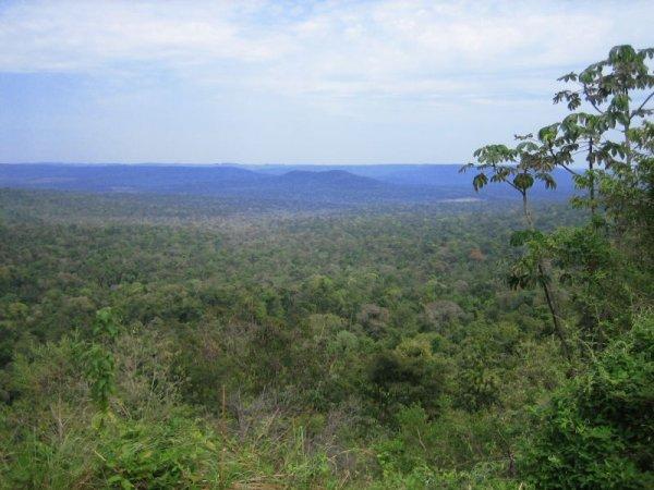 Blick ueber den Dschungel