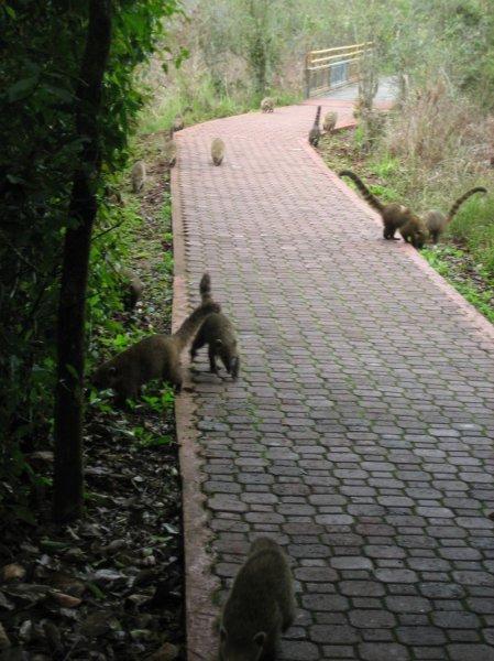 """""""Wilde Tiere"""" empfangen uns in Iguazu"""
