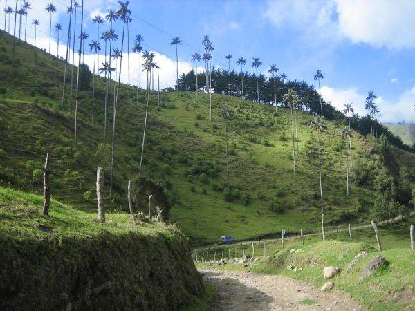Unser Schlafplatz im traumhaften Valle de Cocora