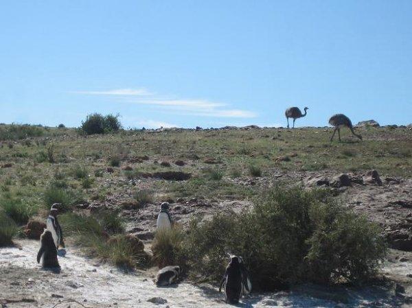 Pinguine und Straussen - friedlich nebeneinander