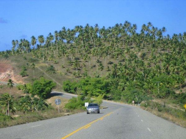 Estrada de Coco