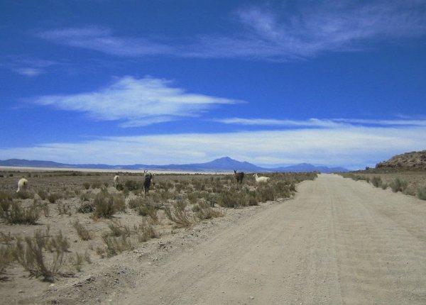 Ripiopiste und Alpakas, ueberall in den bolivianischen Hochebenen