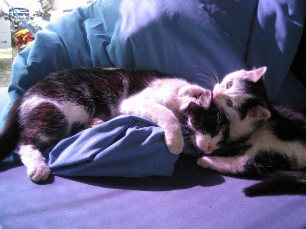 Unsere Kätzchen in Salta