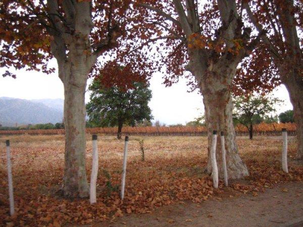 Fantastische Herbststimmung in Cafayate