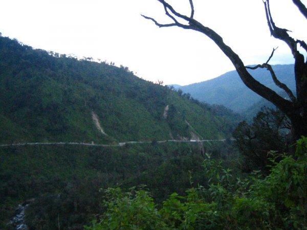 Taffi de Valle - tropisch grün