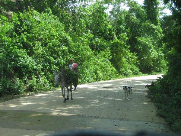 Haste keinen Pick-up, dann haste nen Esel!