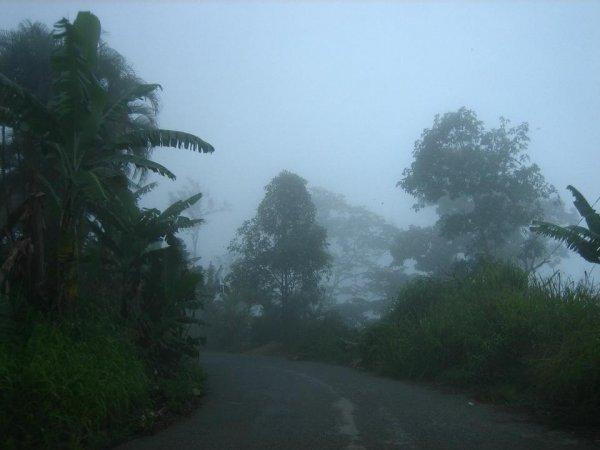 ... durch den Nebelwald