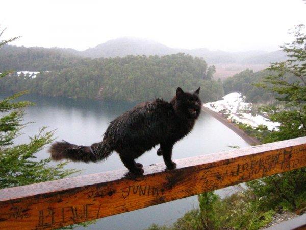 Katze ohne Zuhause, und auch noch Schneeregen