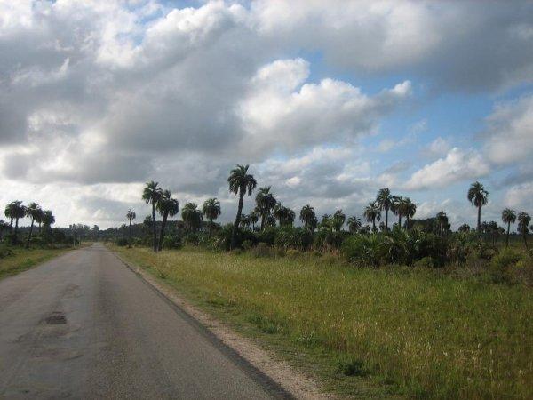 Reste der Palmenhaine, trotzdem traumhaft