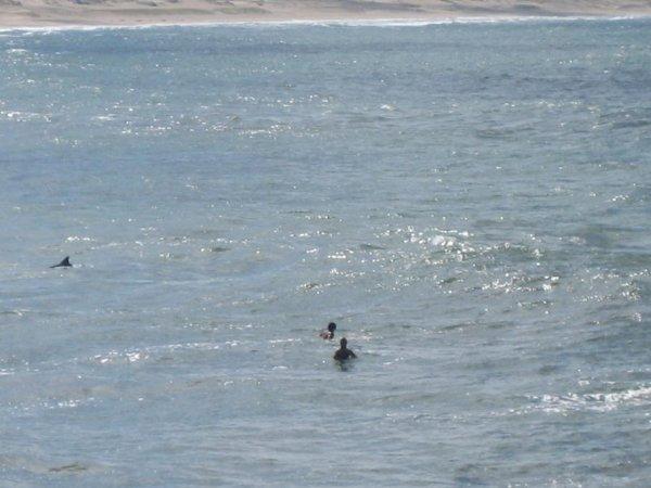 Surfer und Delphine!!